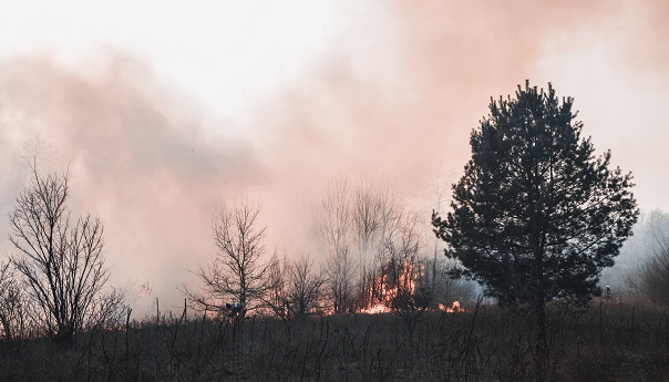 Recent Gender Reveal that Sparked a Wildfire